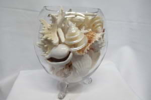 20 Glorious shells and 8 Starfish in a fish bowl