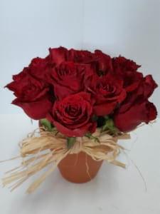Roses in Terracotta pot